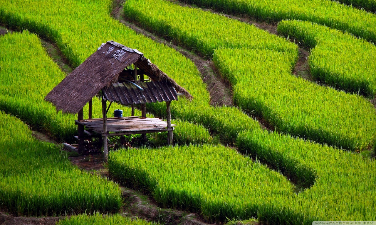 Mars commits to sustainable rice