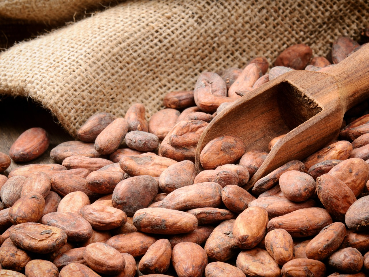 Callebaut licenses cocoa claim to Naturex