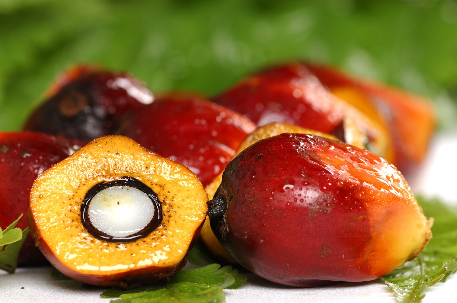 Rabobank reaffirms palm oil commitment