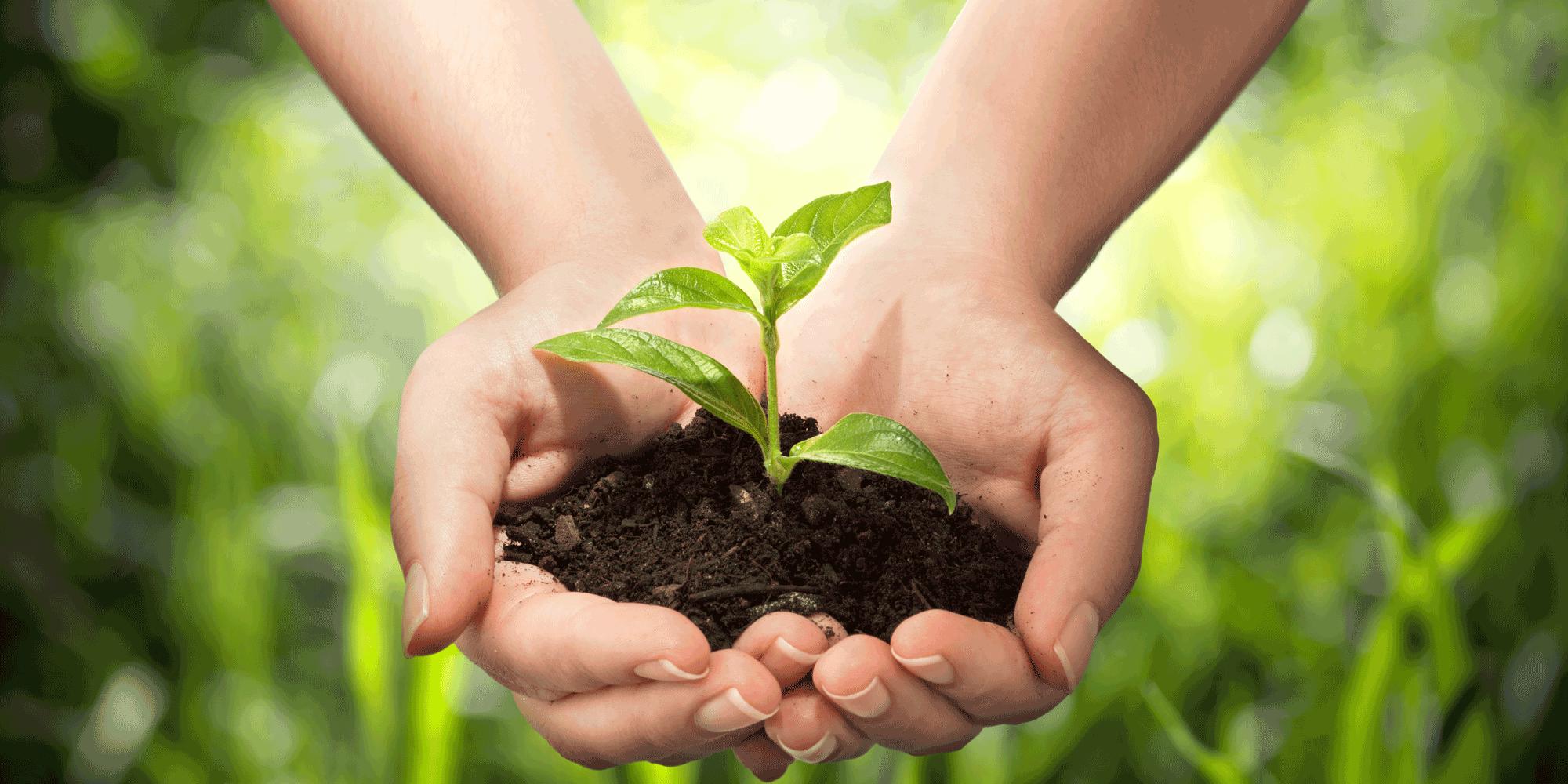 UK organic market grows 4.9%