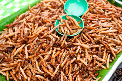 Conference discusses insects as food