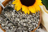 Research: sunflower seeds frequently contaminated