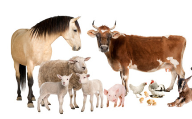 Report: animal welfare concerns reach critical mass