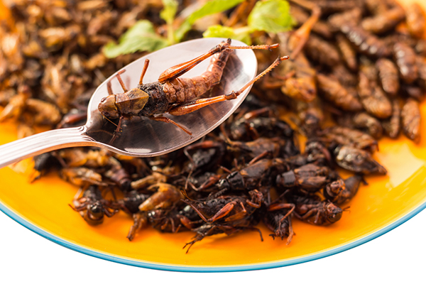 Study: eating insects instead of beef can help climate change