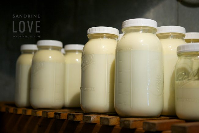 Cornell University, IBM to partner on raw milk safety research