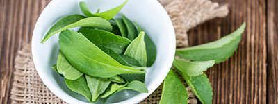 Research provides evidence for the naturality of stevia