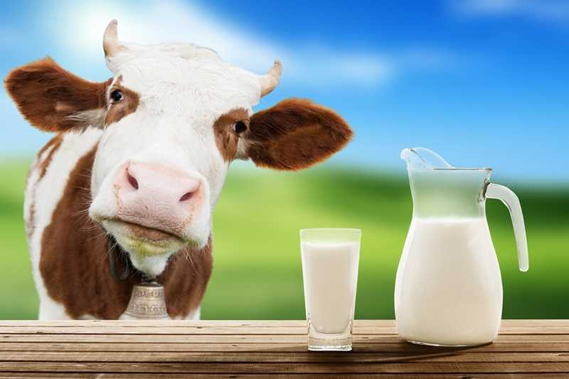 Arla Food Ingredients launches ''Pure Dairy' campaign