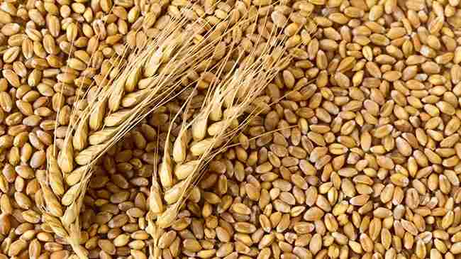 MGP expands range of Non-GMO wheat protein ingredients