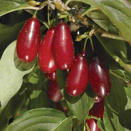 Cherries at heart of new Naturex Energy Boost range