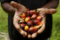 FrieslandCampina Kievit commits to RSPO SG palm oil