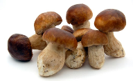 Research: mushrooms found to be high in antioxidants