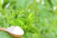 PureCircle notes rise in stevia-enabled product launches
