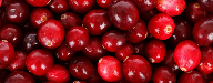 Cranberries show promise for improved gut health