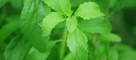 Stevia outpaces aspartame in new product launches