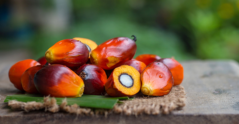 Eradication may not be the future of the palm oil industry