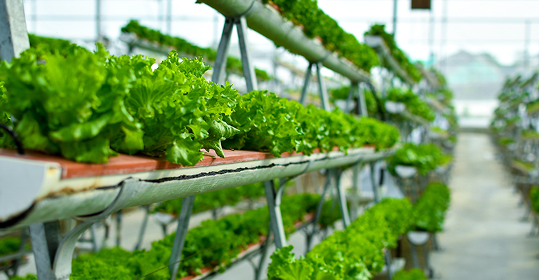 Can indoor vertical farming solve the Gulf's food security challenge?