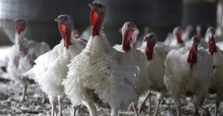 Avian Flu reaches Britain, quarantine measures set