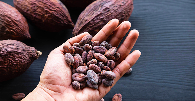 The Cocoa Barometer report shows few improvements in cocoa industry