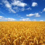 Defoamers & Antifoams | MAGRABAR® J-305 IP