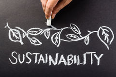 DSM recognised for sustainability