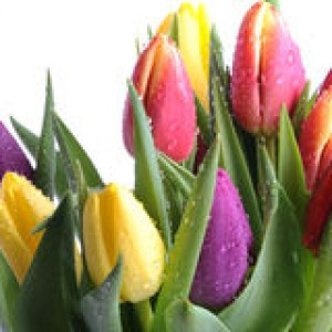 http://www.dreamstime.com/stock-photography-bunch-tulips-image12839742