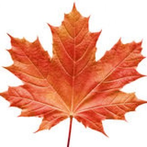 http://www.dreamstime.com/royalty-free-stock-photos-reddish-maple-leaf-image189738