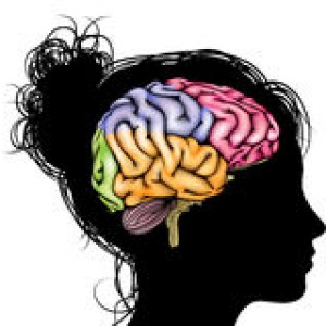 woman-brain-concept-womans-head-silhouette-sectioned-mental-psychological-development-learning-education-44869981