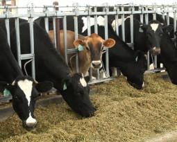 FrieslandCampina profit jumps 85%