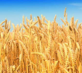 FAO: food prices stabilise