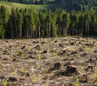 Mars extends deforestation commitment