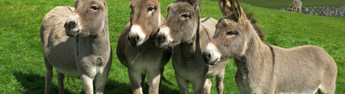 Chr. Hansen: FAR-M can also clot donkey milk