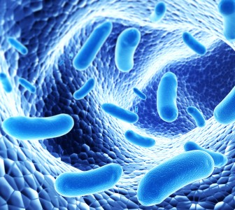 Probi gets largest ever probiotics order