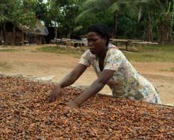 Cargill, Kellogg, ASDA address cocoa farming gender inequality